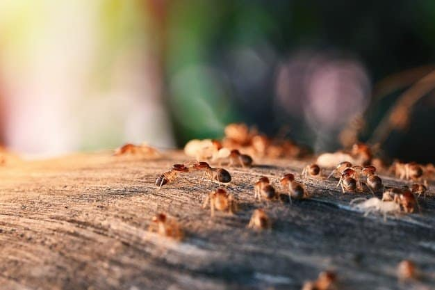 colony-termites-eating-wood_1962-1766