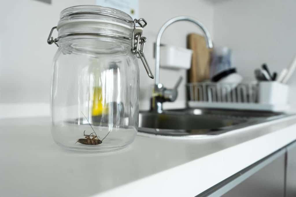 cockroach glass jar kitchen 1 | แอ๊ดวานซ์ กรุ๊ป เอเซีย บริษัท กำจัดปลวก กำจัดแมลง ทำความสะอาด